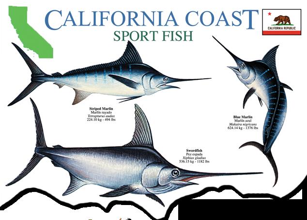 Books dvds for California fishing guide